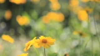Футаж для видео монтажа Footage for video editing Летние цветы(Футаж для видео монтажа Footage for video editing., 2015-05-14T07:38:16.000Z)