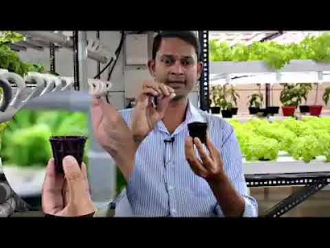 Organic farming -hydroponics concept