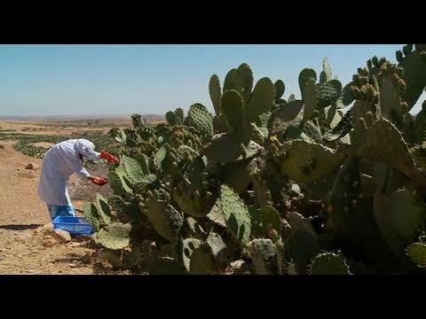 Money Grows on Cactus. Morocco—thinkEQUAL