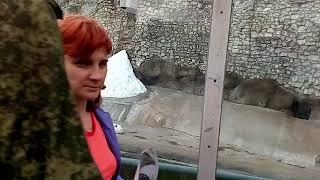 В Московском зоопарке дикий кролик Белая сова белые медведи могильник степной орел весной днем