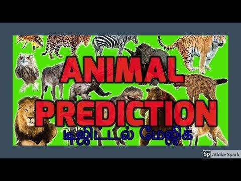 🔔MAGIC VIDEO TAMIL I💥MAGIC TRICK TAMIL #532 I ANIMAL PREDICTION
