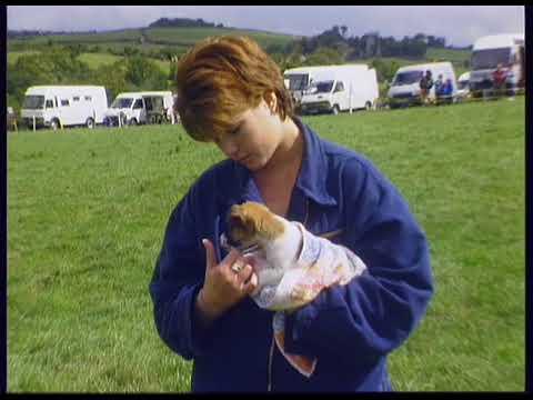 Nanphisick Farm, St Mewan, Cornwall UK.  26th Aug 1996