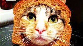 Śmieszne koty [#12]
