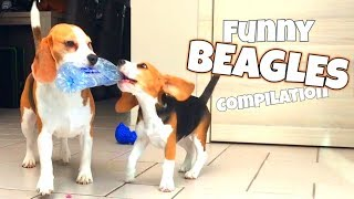 BEAGLES Are AWESOME ! Ultimate Beagle Dog Compilation ft. Louie & Puppy Marie