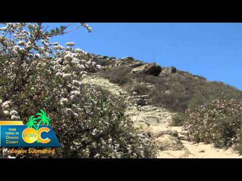 Things to do in Orange County | Suicide Hill in Irvine Ca