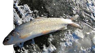 Зимняя рыбалка на Амуре Рыбалка на сига зимой