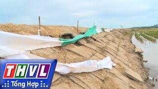 THVL | Người đưa tin 24G: Đê bao chống lũ Quảng Điền ở Đắk Lắk bị sạt lở nghiêm trọng