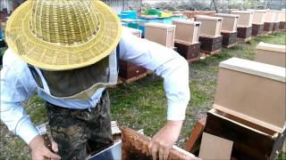 пересадка пчелопакета handling small bee families