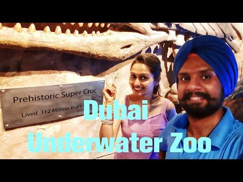 Dubai Underwater Zoo|Part 2|#dubai #dubaizoo #travel #travelwithsidhuzz