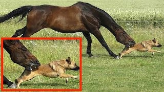 When Horses Attack