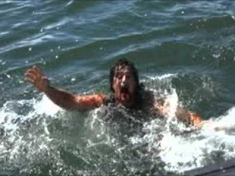 Alligator vs shark attacks - photo#25
