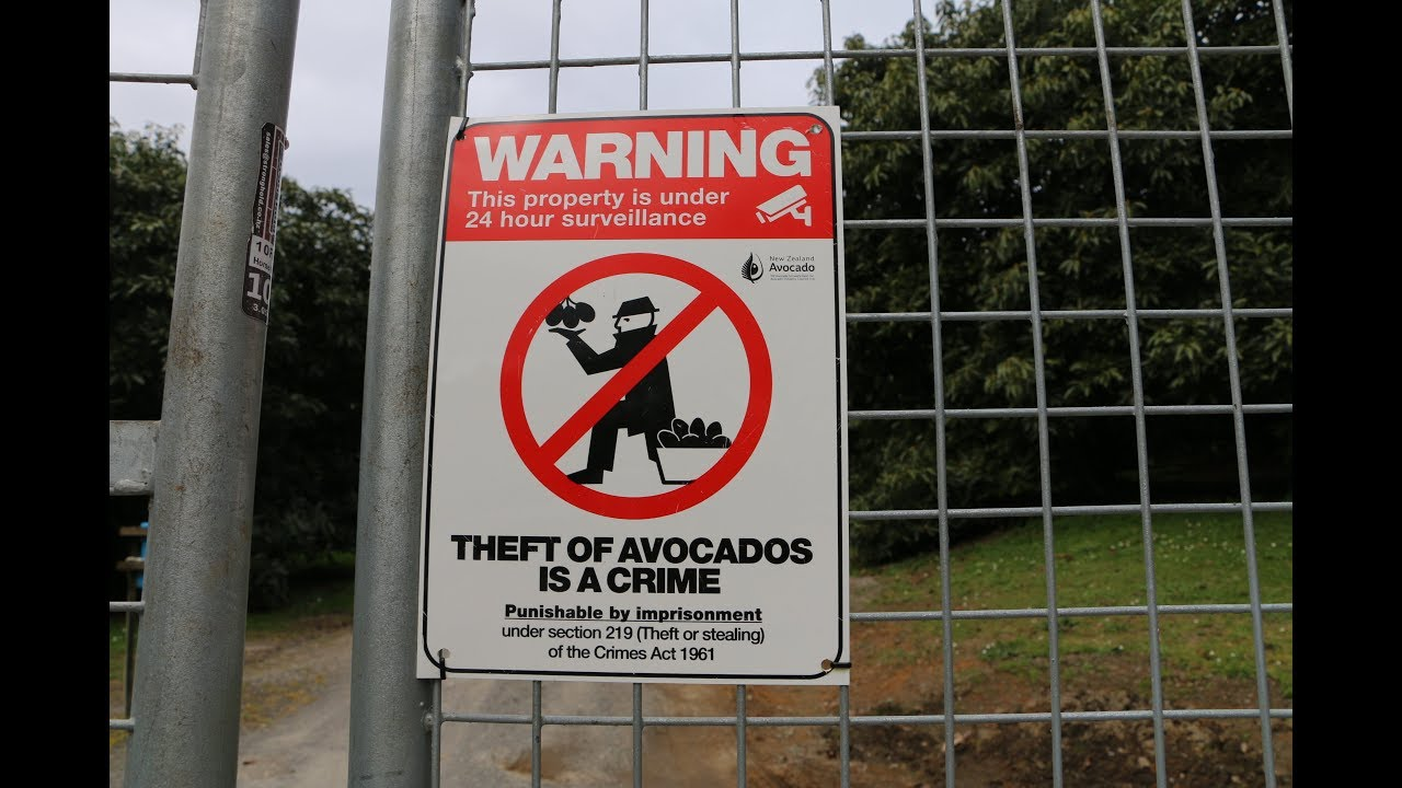 Fighting back against the avocado crime wave | RNZ News