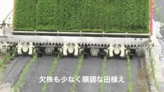 Repeat youtube video J-RAP2012稲作vol6【無農薬栽培田(紙マルチ田植え)】