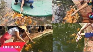 Tận mắt xem đàn cá chép hóa 'thành tinh' biết bú bình sữa như em bé ở Bến Tre