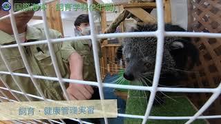 大宮国際動物専門学校 ~動物看護師・トリマー・動物飼育員・ドッグトレーナーを育成する専門学校~