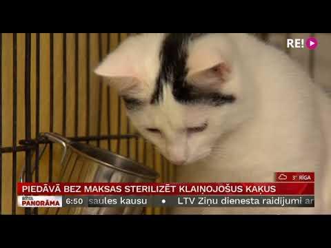 Piedāvā bez maksas sterilizēt klaiņojošus kaķus