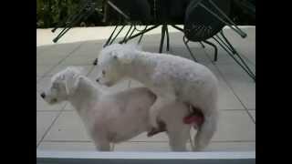 Приколы про животных 3   смотреть бесплатные видео приколы онлайн1