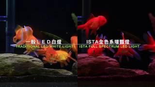 ISTA Full Spectrum LED Light - Enhancing 全色系增豔燈-金魚篇