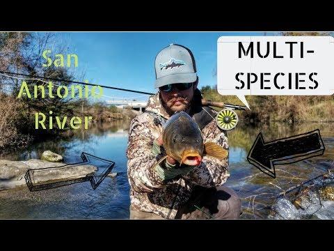 Urban Fishing DownTown San Antonio Tx - The Hunt - Part 2