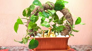 How To Grow Money Plant || Money Plant Growing Idea || Pothos Growing Idea