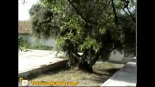 Cabañas Fuente del Lobo | Cabañas Rurales en Granada | TusCasasRurales.com
