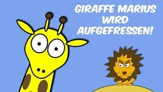 Giraffe Marius - AUFGEFRESSEN!