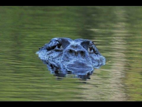 Вопрос: Какие самые опасные существа живут в Амазонке?
