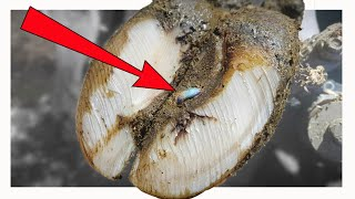 FOUND SOMETHING IN COWS FOOT **FIRST TIME EVER!**