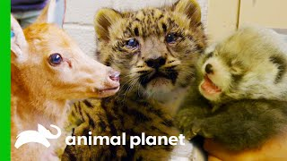 The Cutest Baby Zoo Animals   The Zoo