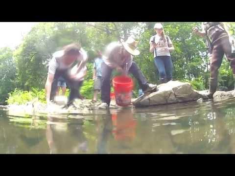 GoPro HD: Electrofishing in The Bronx River