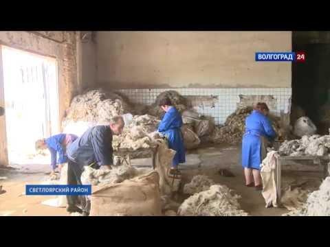 Уникальное предприятие по обработке шерсти