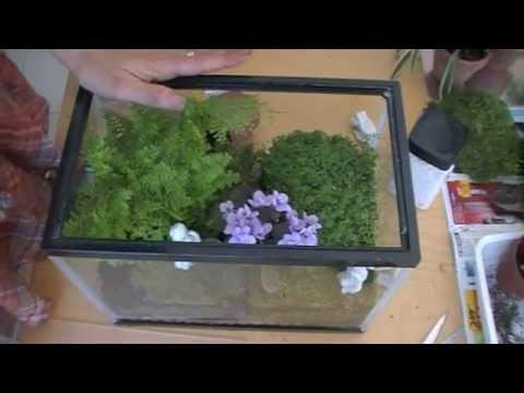 Como hacer un terrario how to make a terrarium ecodaisy for Como preparar un jardin
