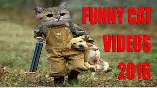 Vicces Macska Videók 2016 - Nem Tudja Abbahagyni A Nevetést