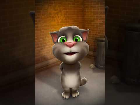 Konuşan Kedi Tom Geceler Sarhoş