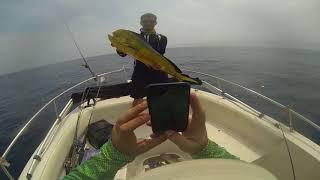 Ловити Золоті Балнеаіо-Барра-Сул / MahiMahi Fishing