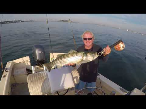 Boston Harbour Striper Fishing.
