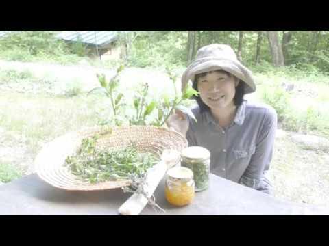 【おうちYOJOEN】セルフケアハーブの収穫と楽しみ方