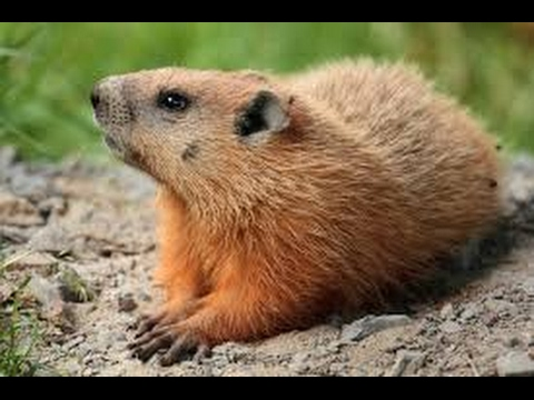 7 Fun Facts About Groundhog Day