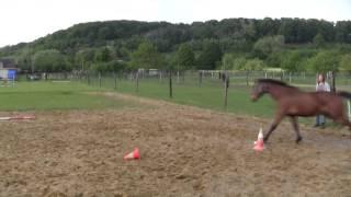 Hoe stop je een paard dat ervandoor gaat aan het touw?