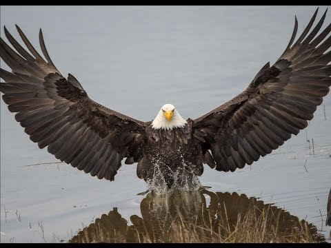 01-12-2018 News of Eagle Nests - Dale Hollow Nest + Eagle Quiz - Win Prizes + Surprise Announcement