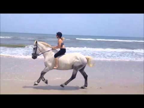 Beach Gallop!