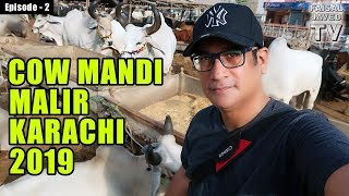 COW MANDI Malir Karachi 2019   Episode 2   Video in URDU/HINDI
