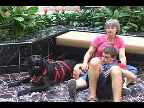 4 Paws For Ability - Autism Assistance Dogs w/Tethering - YouTube