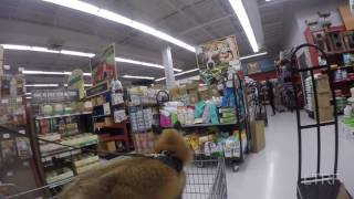 Pet store trip for a fox Mp3