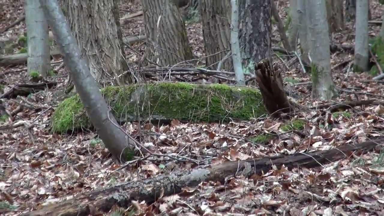 Hürtgenwald Gefährlich