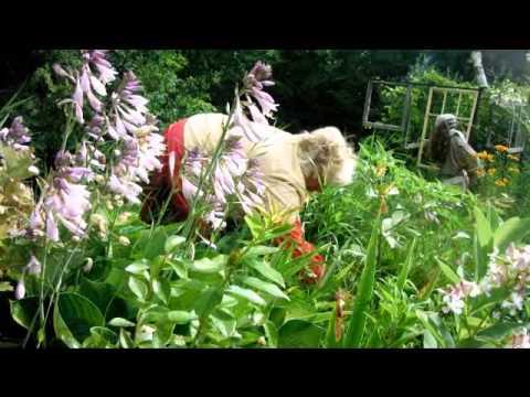 Nancy Today: Morning weeding in the flowers ASMR