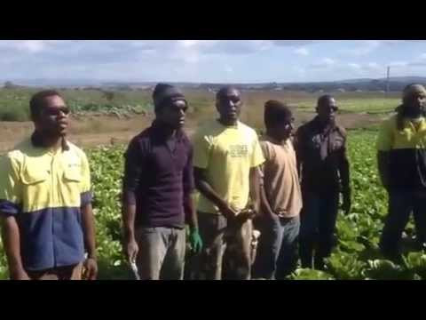 Vanuatu seasonal workers sing for their families