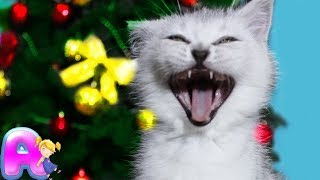 Cats are so funny you will die laughing / Funny cat