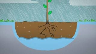 Planting A Bare Rooted Tree