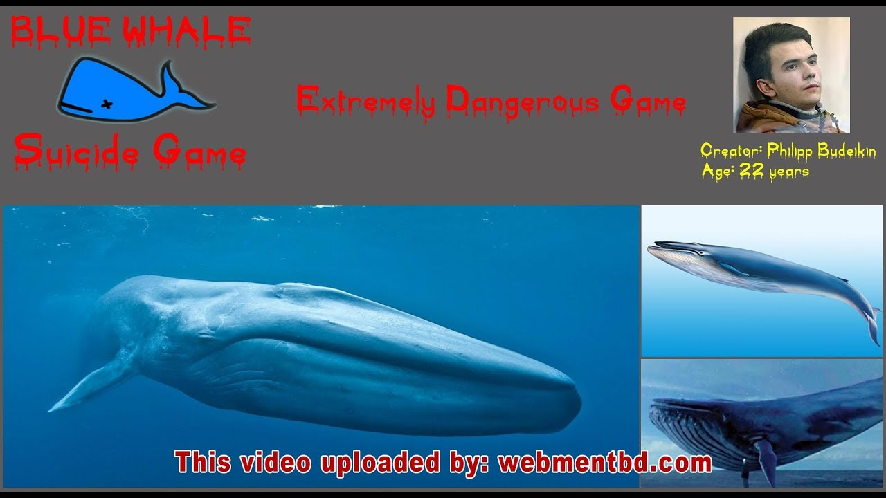 Blue Whale is the worlds largest living animal The largest blue whale ever discovered is 108 feet long that mean it is bigger than 3 large school buses and